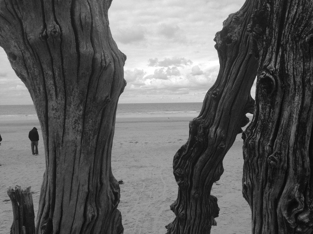 Driftwood Posts