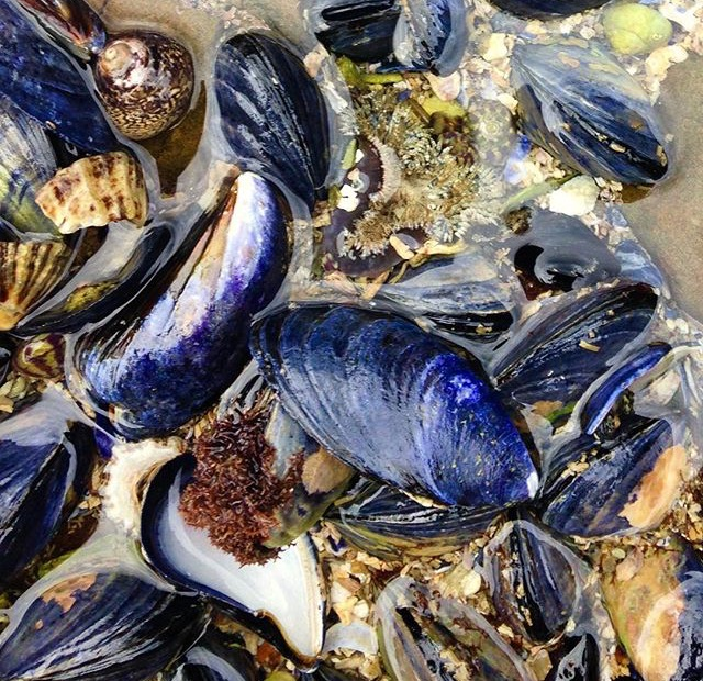 Clams and Shells