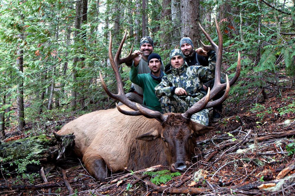 2016 Elk.jpg