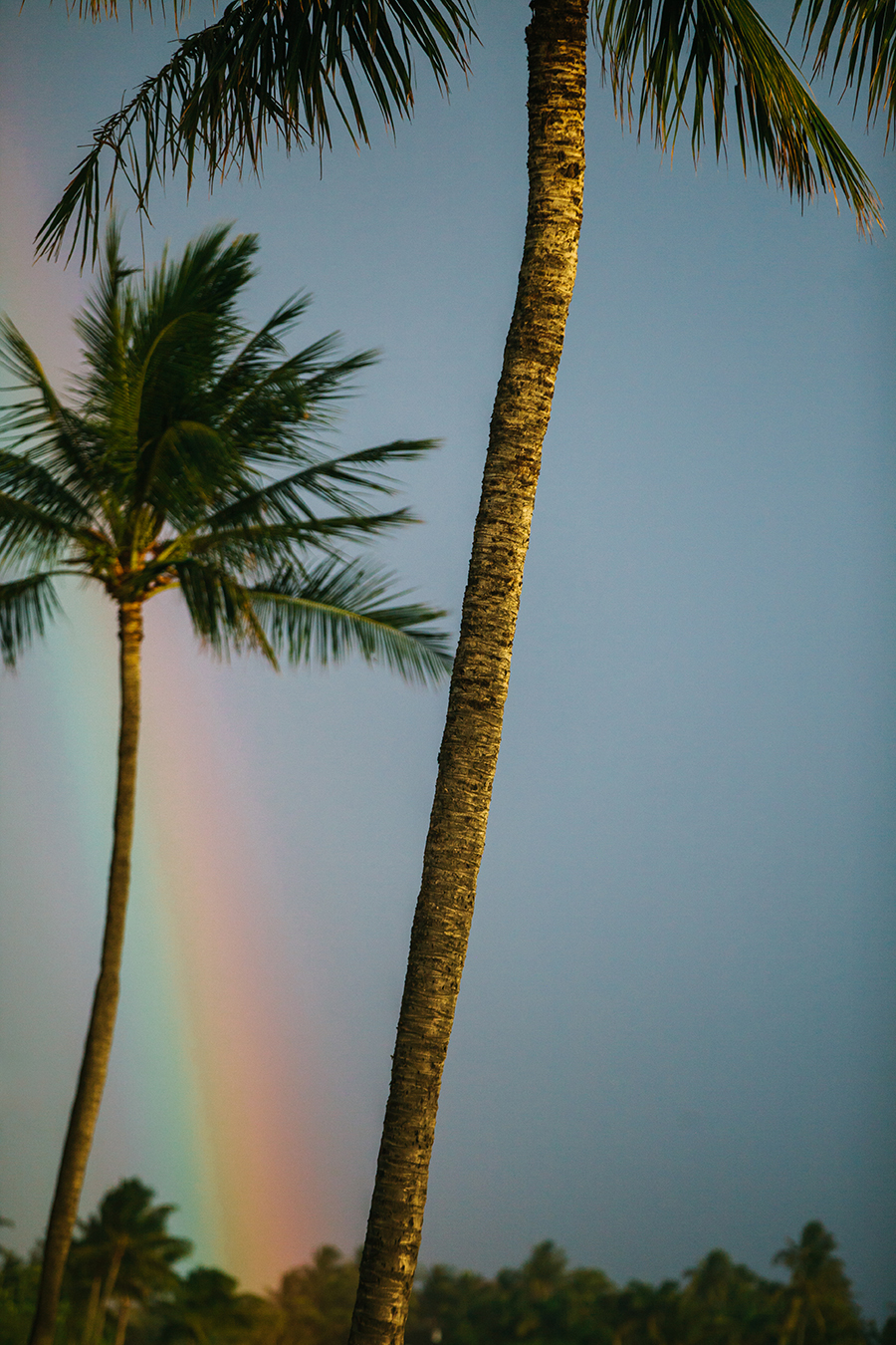 Rainbow and Palm Trees from a Hawaii Destination Wedding