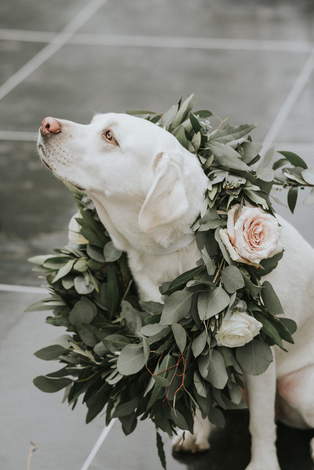 Flower Wreath for the Dog Ring Bearer