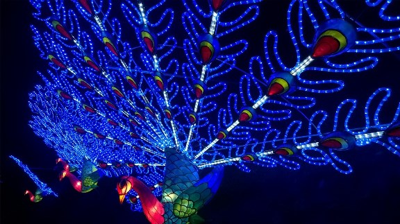 peacock_lantern_l.jpg