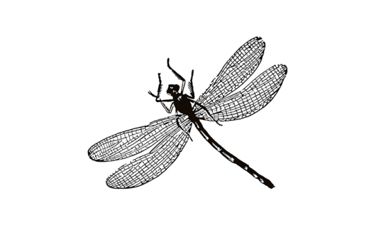 dragonfly-brewery.png