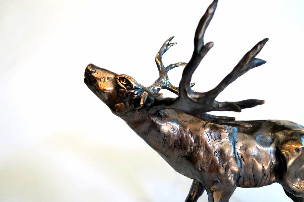 Colorado-Mule-Deer-Looking for Inspiration-Kaisa-Kangro -2016(3).JPG