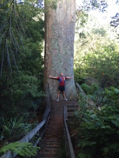 1000 yr old Kauri trees, young runner