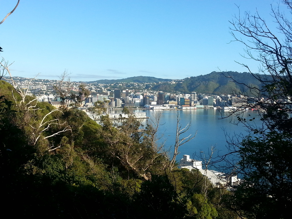 views of the Wellington from Mt Victoria