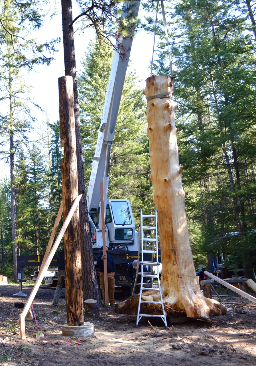The Build Was Held Up Until This Point As The Tree Is Serving As A  Centrifugal Point To Which The Builders Need To Add Support Beams Off Of To  Start The ...
