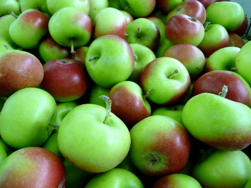 milk pail apples