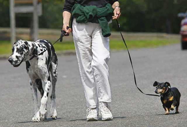 Bid Dog and Little Dog