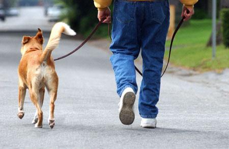 man_walking_dog.jpg