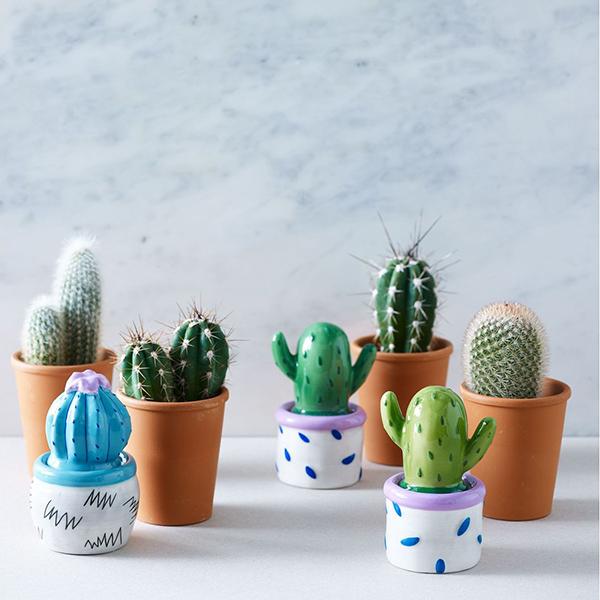 cacti-4.jpg