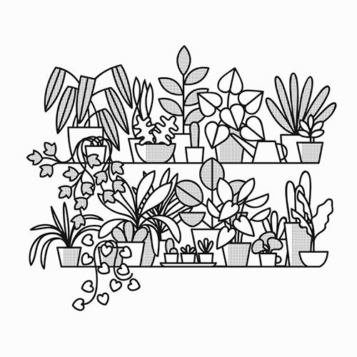 PLANTSHELVES_1100.jpg