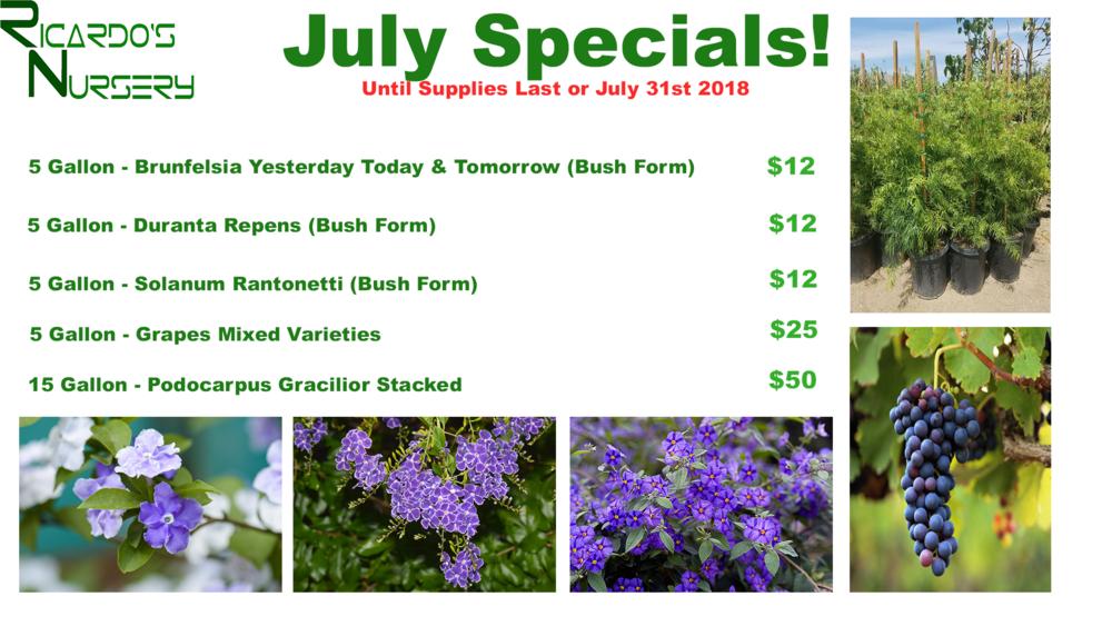 July Specials.png
