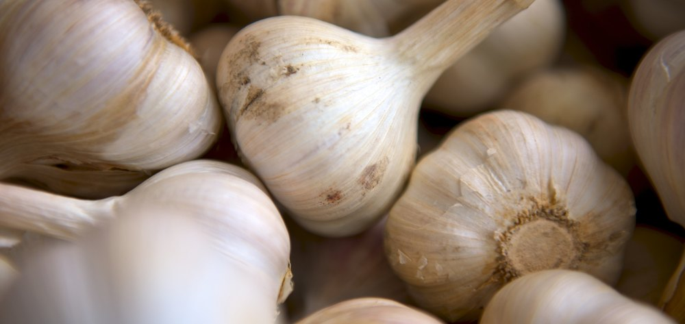 GARLIC FOR IMMUNE SUPPORT    Learn About Trinity Root