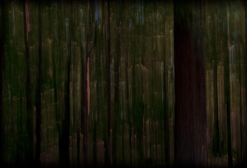 TreeBlur2.jpg