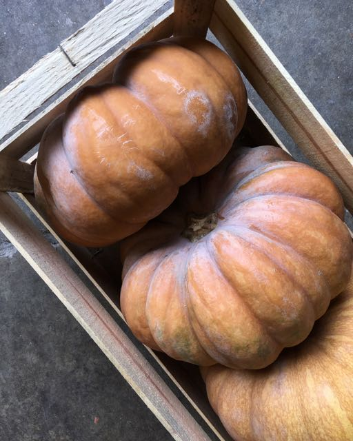 Musquee de Provence Pumpkin    Photo ©Evie Saffron Strands    NOVEMBER    The end of October brought a shift from Scottish Chanterelles and Girolles to fungi from France and Italy.  Muscat and Chasselas Grapes saw October out and the French Quince arrived to perfume our shelves.  English Apple and Pear varieties changed through the month and Winter Squash and Pumpkins swept away any attempt at denial that mid-autumn had arrived, despite some beautiful warm days in London.