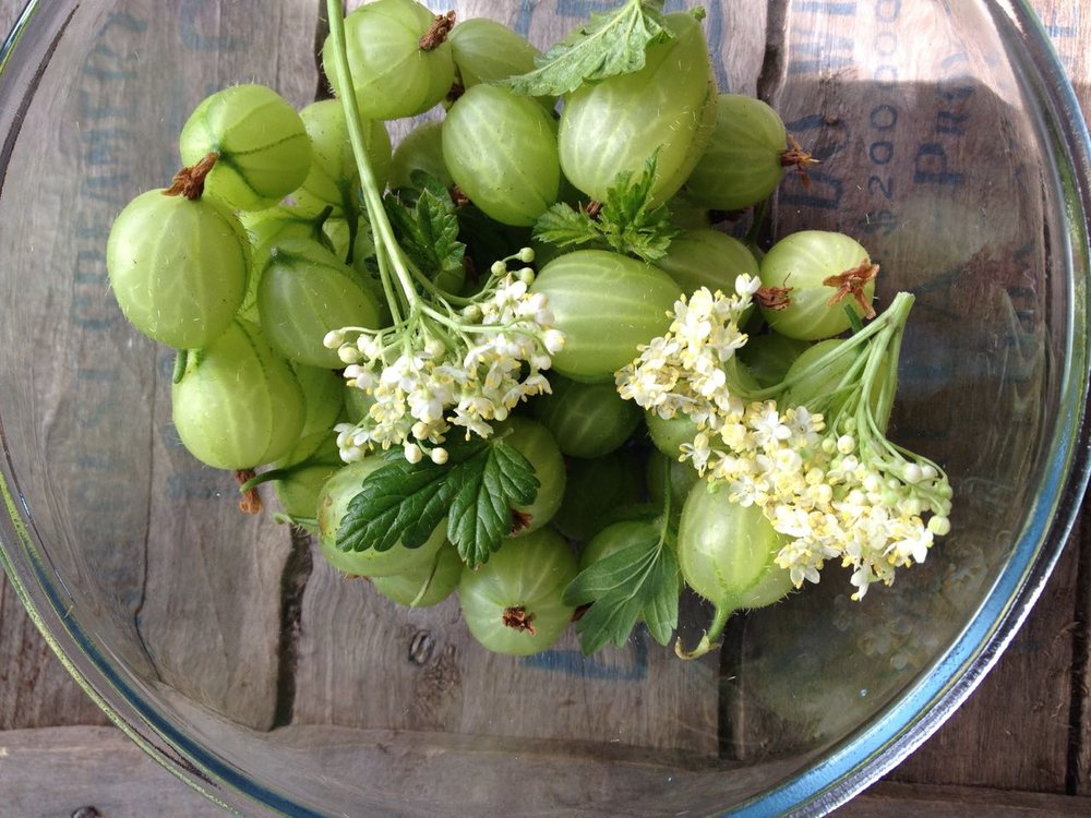 Gooseberries and Elderflowers    Photo © Evie Saffron Strands