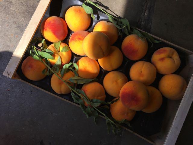 Percocha peaches Photo ©Evie Saffron Strands
