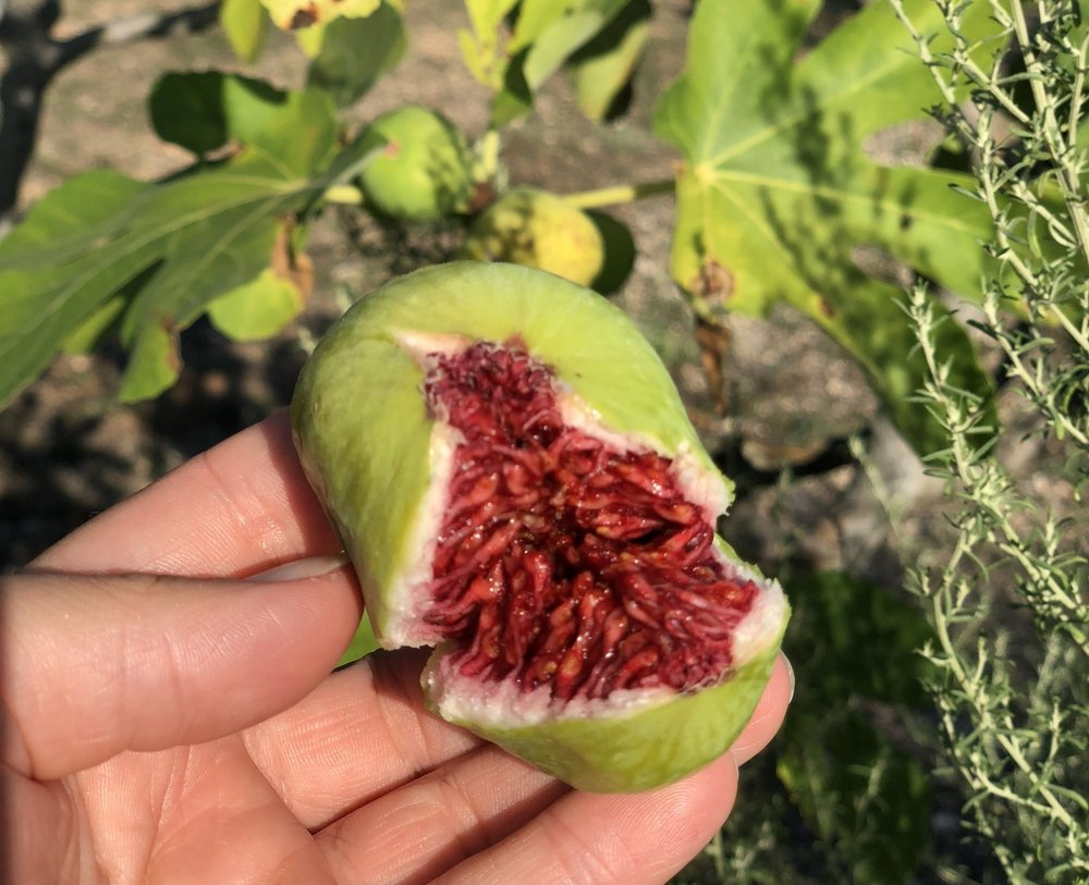 Green Figs in Puglia    Photo © Puntarelle&Co