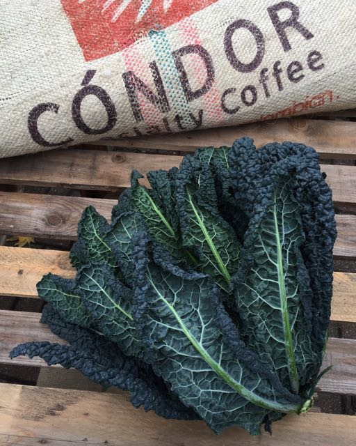 Cavolo Nero/Black Cabbage    Photo ©Evie Saffron Strands