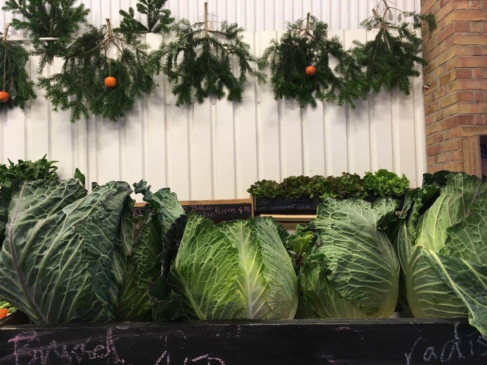 Cabbages at Christmas    Photo ©Evie Saffron Strands