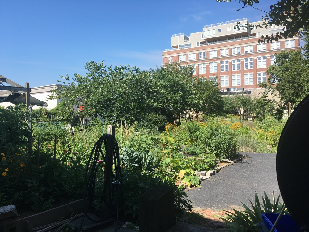 Community garden at home in S. Philly
