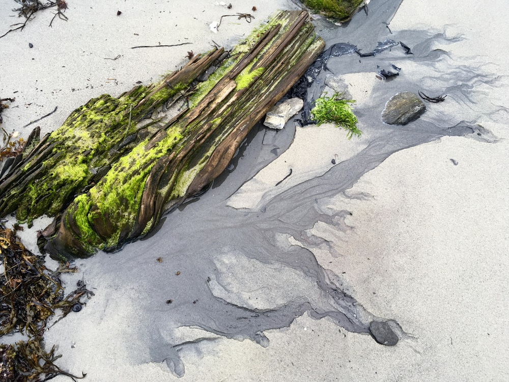 Driftwood at Fowler's