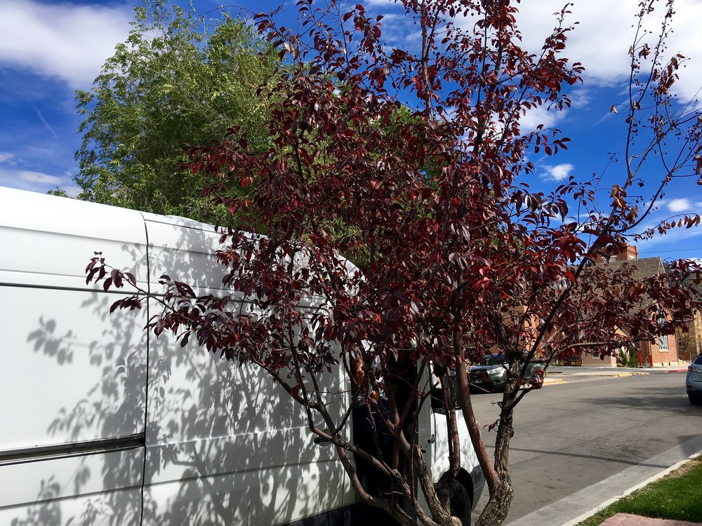 You can barely see the van behind the tree... #Stealth (Salida)