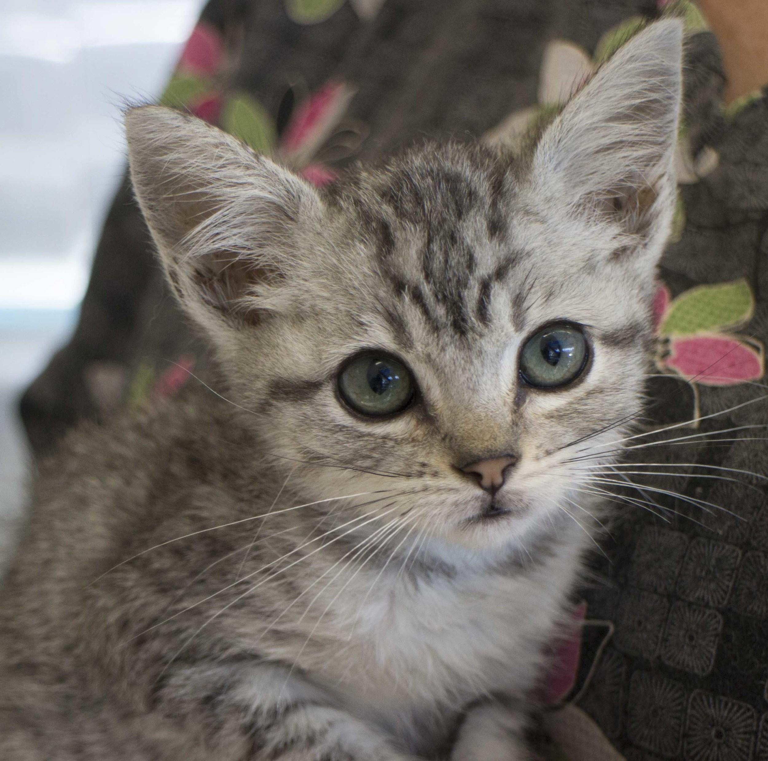 michelle kitten tinyIMG_8799