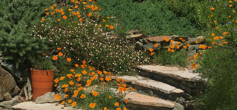 Design — Oak Hill Landscape Design
