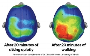 On the left, is your brain after 20 minutes of sitting. The brain on the right shows what is going on after 20 minutes of exercise, indicating heightened attention and faster information processing.