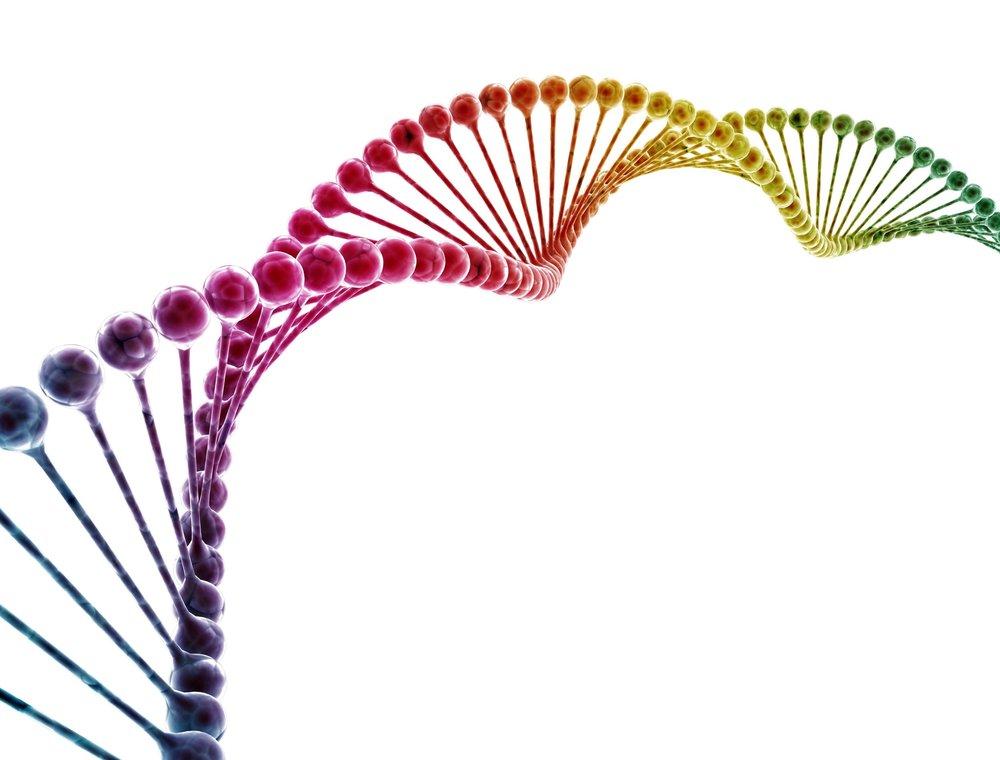 Find jeres vinder DNA -