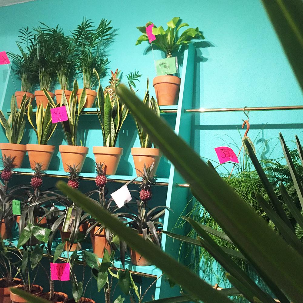 Plantehimmelen