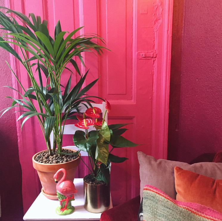 Pink, palmer og penisblomster