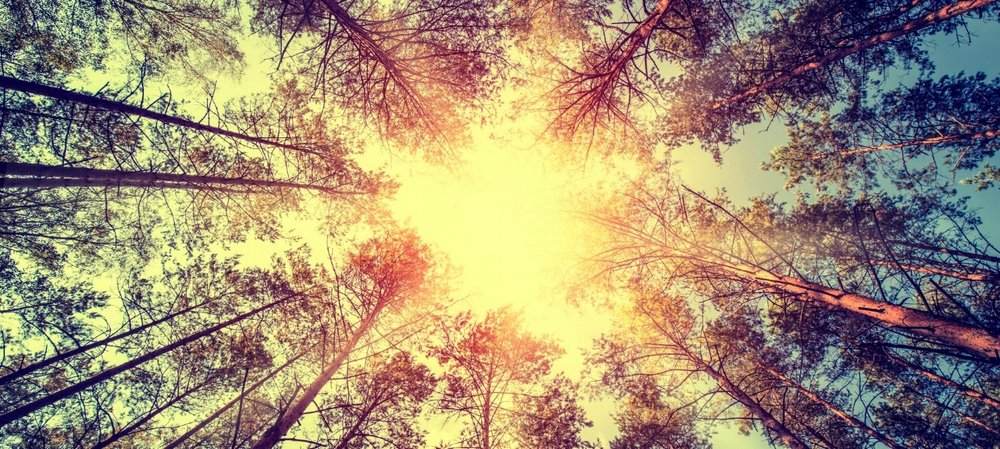Sun through trees.jpeg
