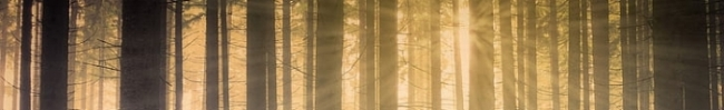 forest-forest-in-the-mist-sun-in-the-forest-sun-rays-preview.jpg