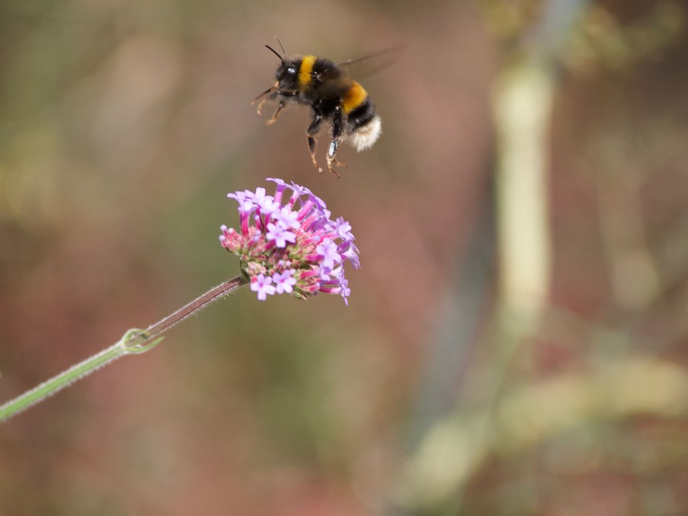 Pollinators are vital for our food