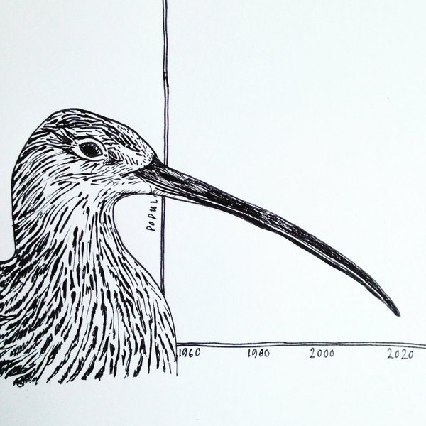 Scottish Curlew Workshop will take place in September 2018