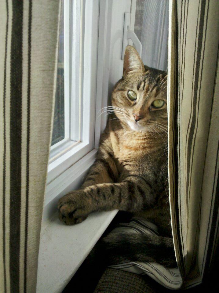 Matilda Window.jpg