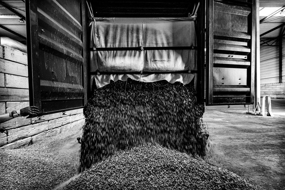 Bart Vos - Van A tot IJ - Cacao.jpg