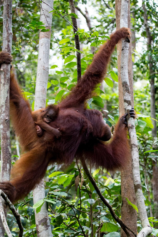 Borneo-104.jpg