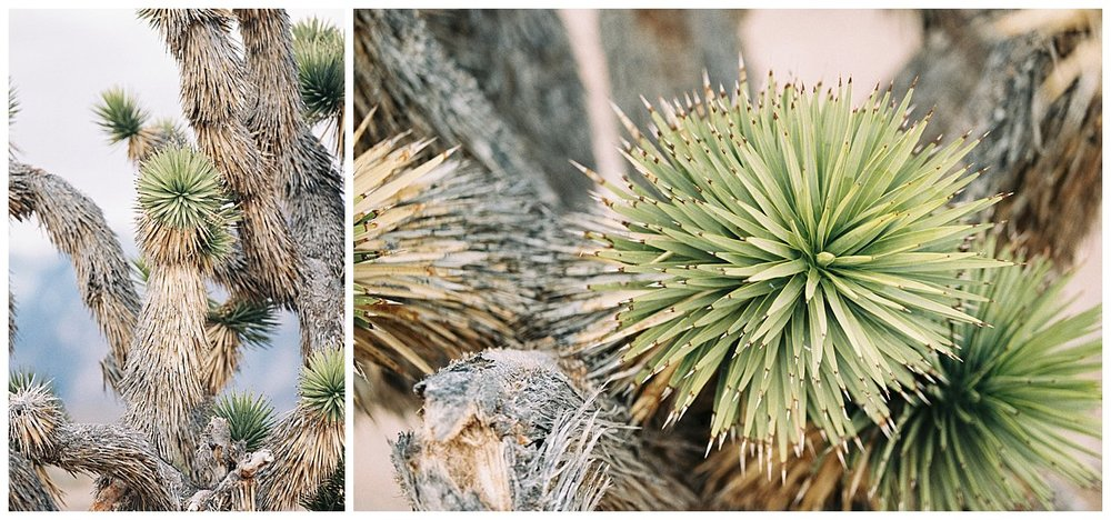 This cactus tree really intrigued me. I loved it!