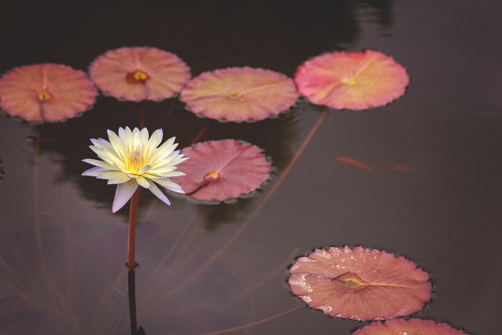 Lillyflower1.jpg