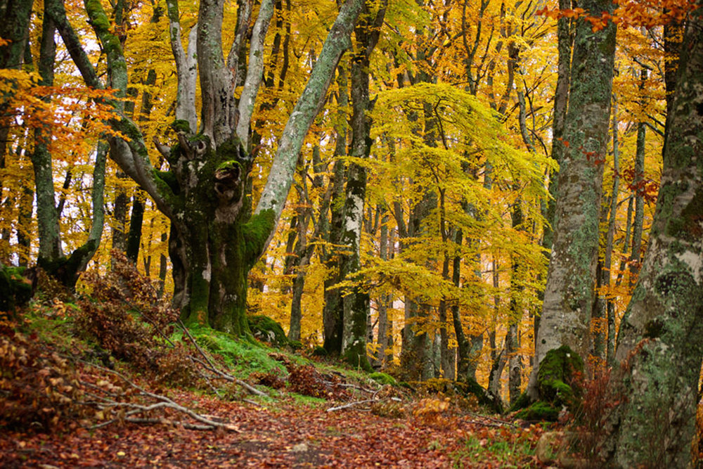 bosco-santantonio-autunno-fracasso-funaro-direzione-italia-4.jpg