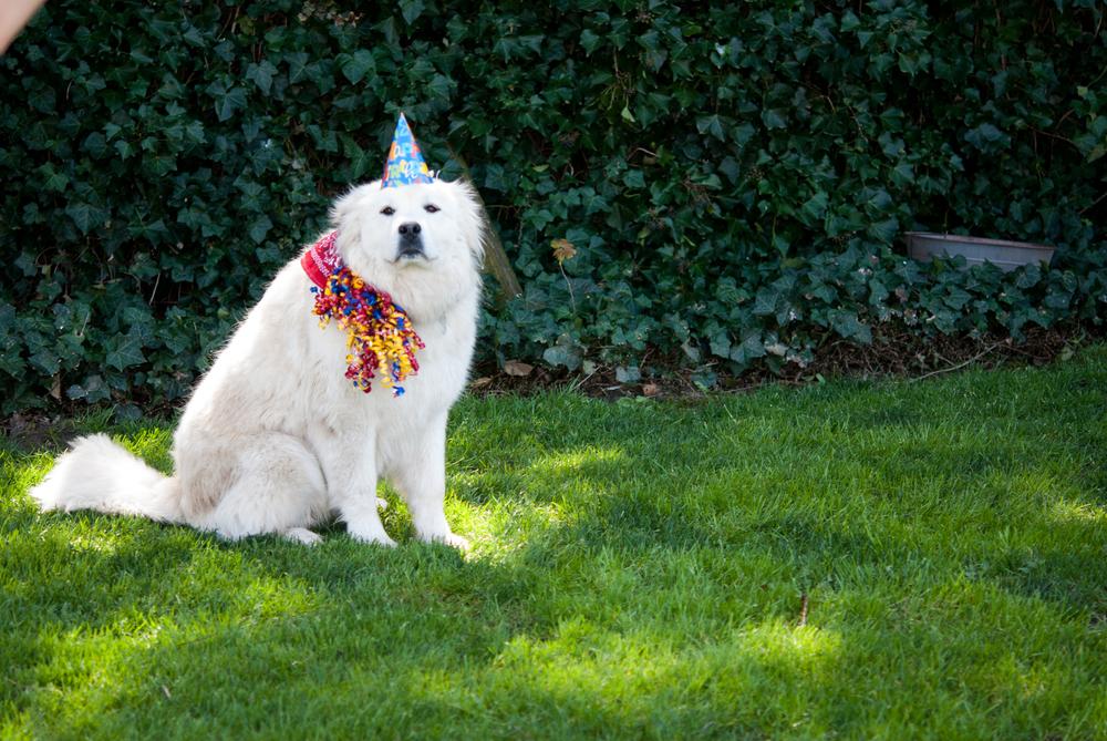 Birthday Dog Shoot