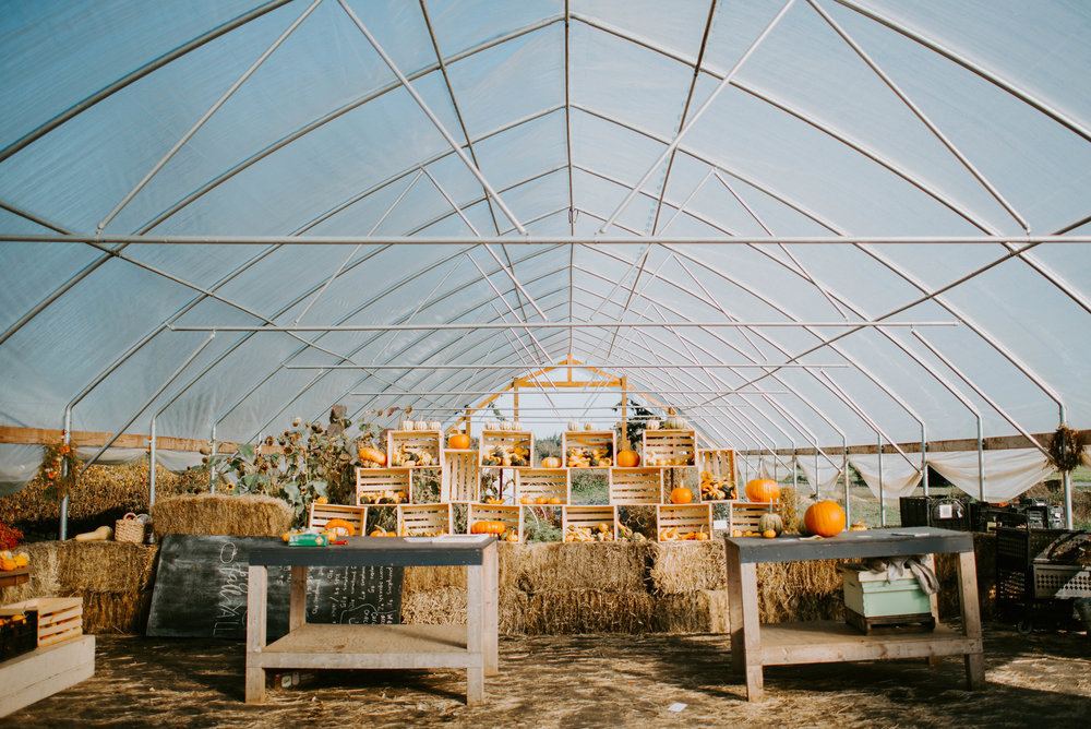 Triple Wren Farms Pumpkin Patch