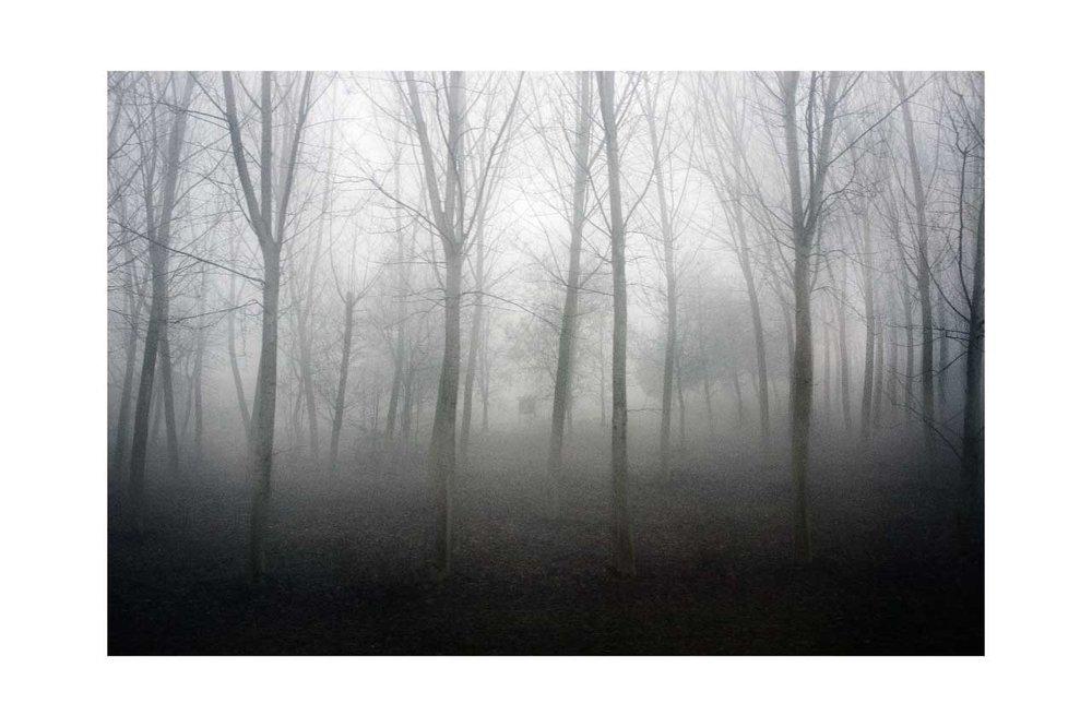 Trees-Fog-Road