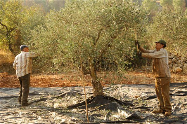 Photo source: Sindyanna of Galilee,Jean Louis Brocart.