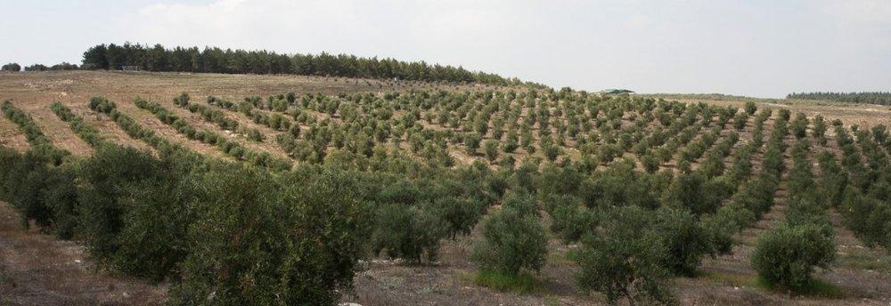 Photo source: Sindyanna of Galilee,Erez Harodi.