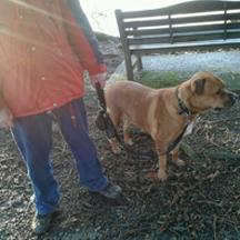 Dog Poop Holder testimonial
